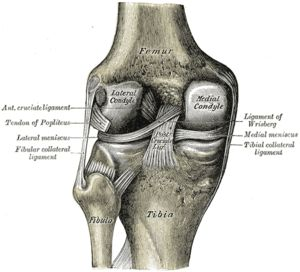 Via Forbes: Bottom line: physical therapy for meniscal tears and arthritis may help to avoid surgery and its potential risks.