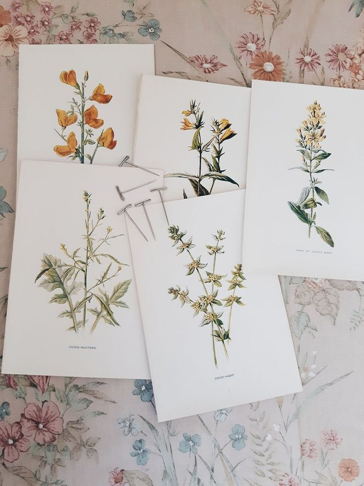 ...antique botanical prints available from The Linen Garden department store.