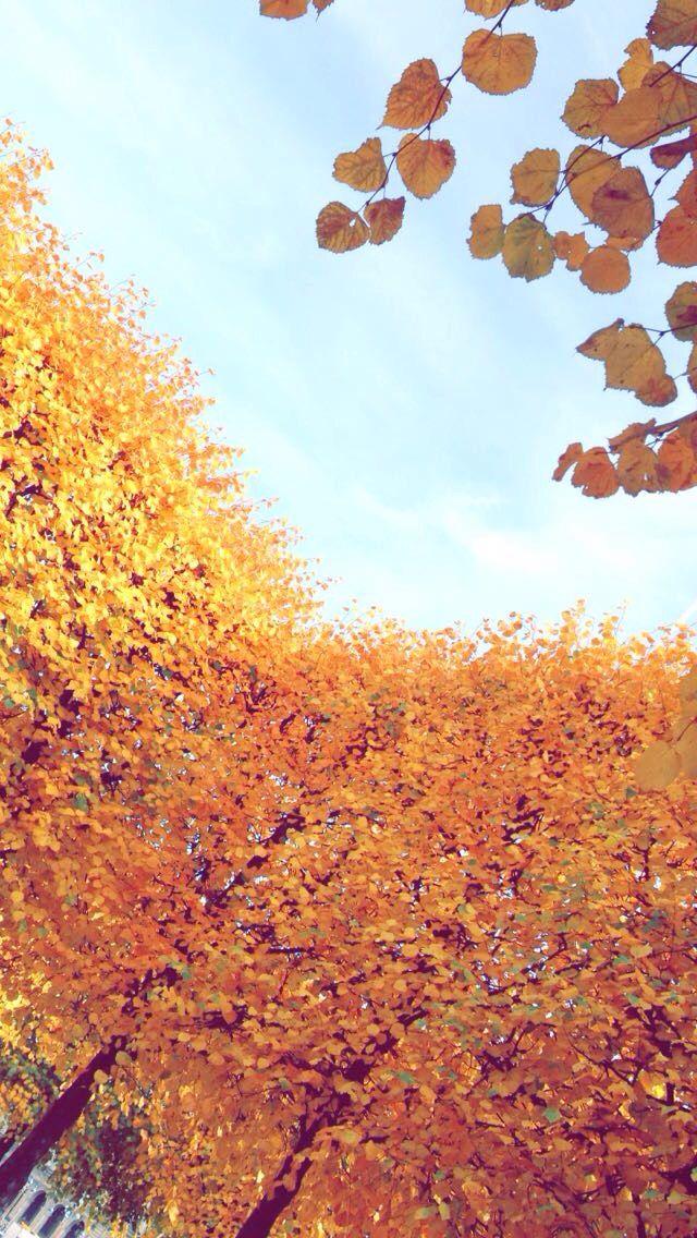 Paris, France. Autumn