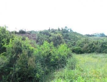 beautiful #agricultural_land #for_sale in #Ulcinj #Montenegro.