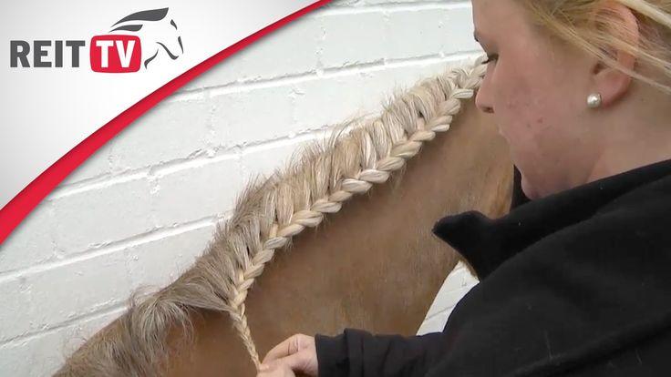 Der Mozartzopf für Haflinger, Friesen und Pferde mit langer Mähne