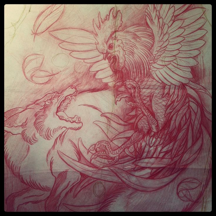 Rooster vs fox