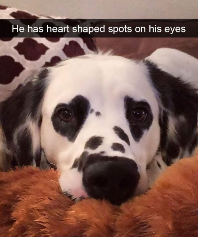 Funny Snapchats Dog Photo - 190 Pics – Funnyfoto | Funny Pictures - Videos - Gifs - Page 185