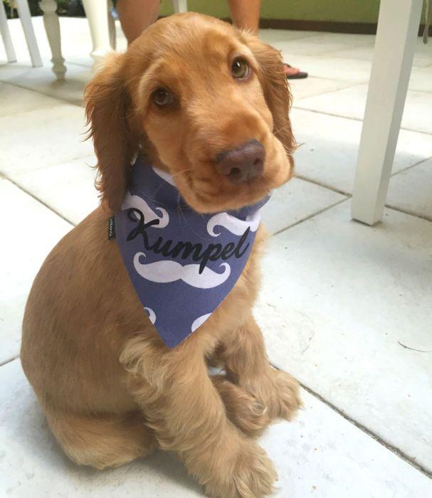 Bandanka apaszka z imieniem Psa, personalizowana chusteczka dla pupila, wzór Wąsy, Psiakrew – Cena   sklep internetowy Psiakrew