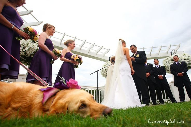 wedding and dog