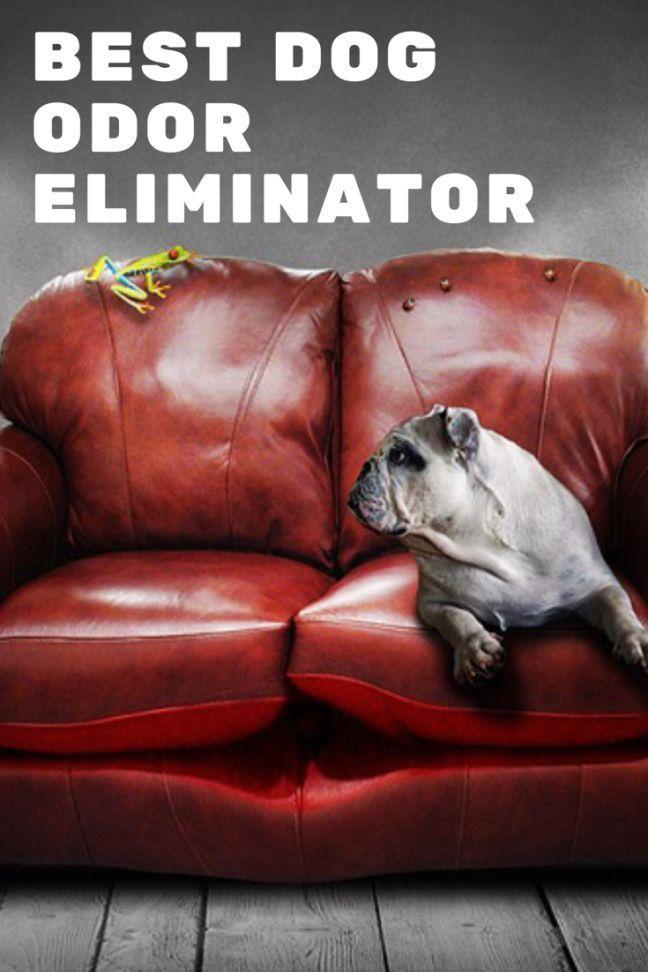 Best 25 Dog Pee Smell Ideas On Pinterest Pet Urine
