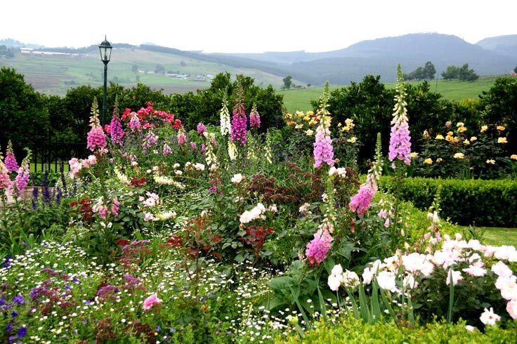 Mixed Herbaceous border, St Clements: Roses, Foxgloves, Delphiniums, Foxgoves etc