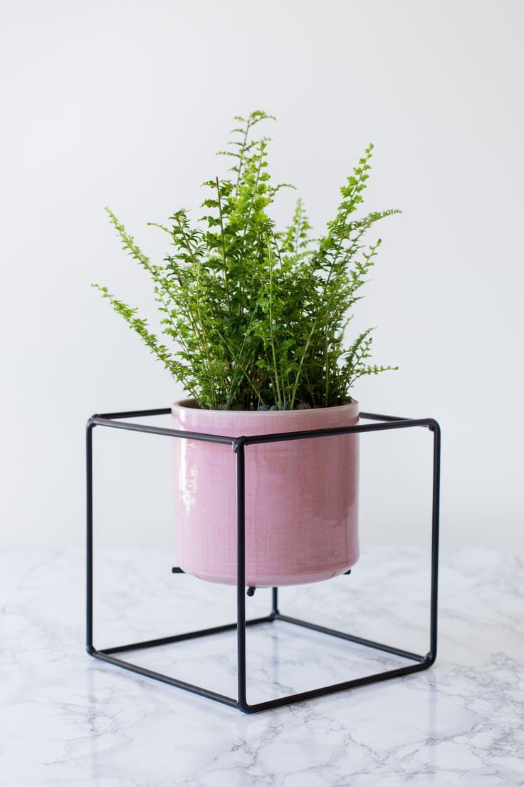 Plant Cube design by Ryan McQuerry for Outside In.