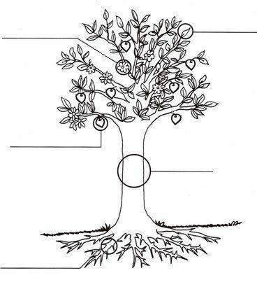 planta con frutos ra z dibujo buscar con google