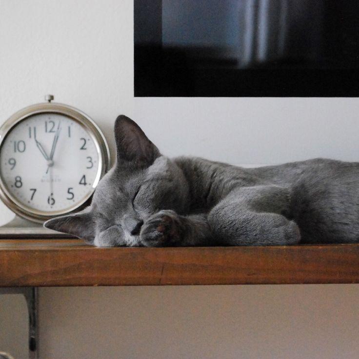 cat ♡                                                                                                                                                                                 More