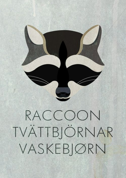 """Raccoon, tvättbjörnar, vaskebjørn"" It bugs me a little that the Swedish word is the only one in plural but it's a cool rendering of a raccoon face."