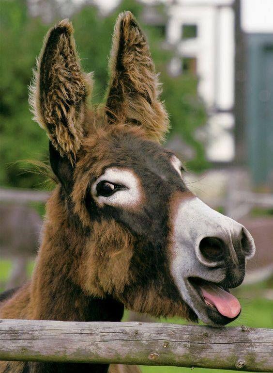 Donkey xxx