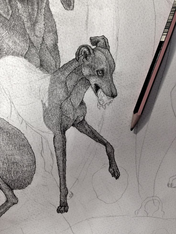 Lupus - Original pencil drawing for a luxury scarf design. - Sabina Savage