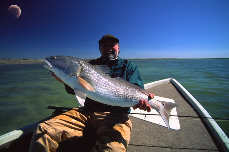 19 best images about florida 39 s west coast on pinterest for Florida fishing seasons