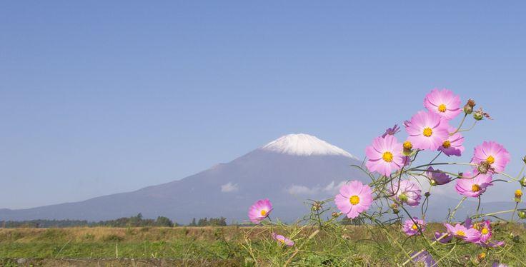 初冠雪 御殿場の富士山