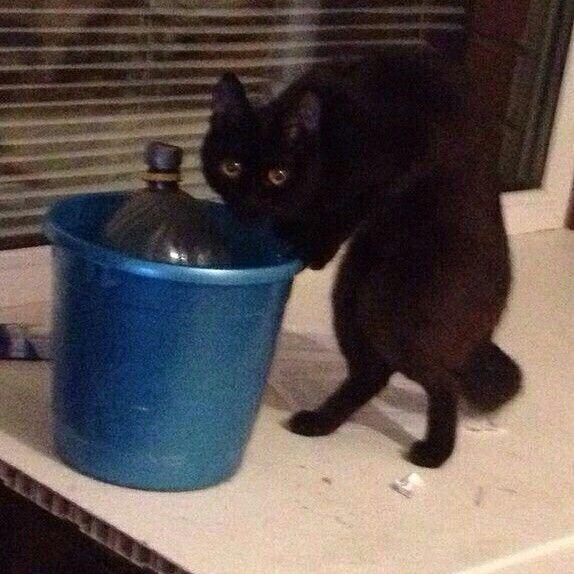 Кот-алкоголик горе в семье