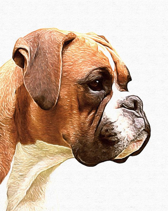 """It""""s an Exact painting of My Seamus!!! ♡♡♡ Boxer without cropped ears painted in by AnimalArtIncognito"""