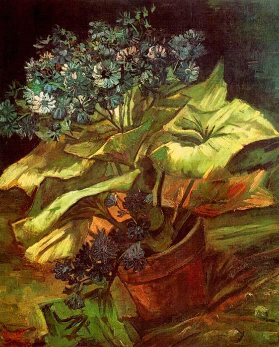 Vincent van Gogh. Cineraria in a Flowerpot. Paris: July-August 1886