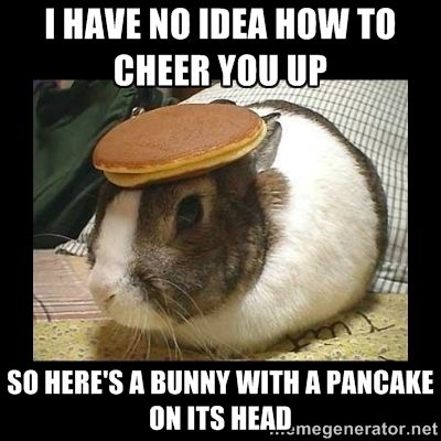Bunny with Pancake on Head - I have no idea how to cheer you up so here's a bunny with a pancake on its head