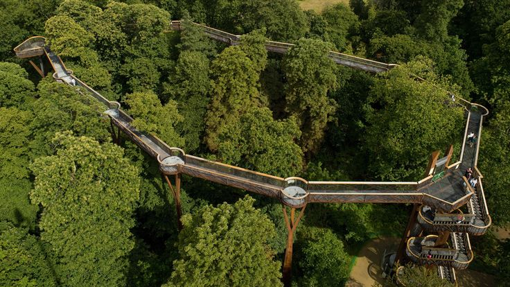 Aerial view of Treetop Walkway