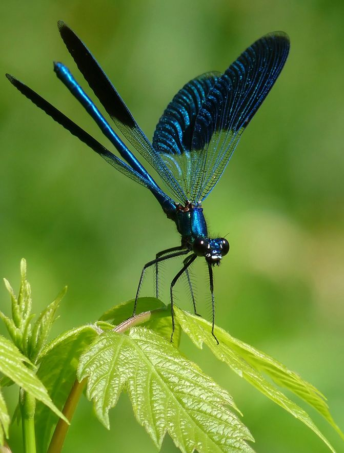 147 best Dragonfly images on Pinterest | Dragon flies ...
