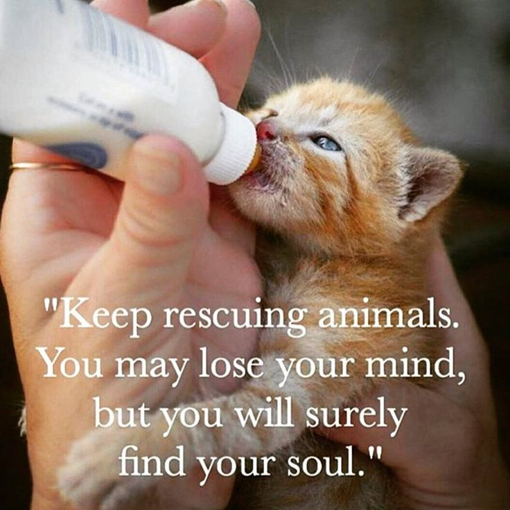 Pinterest Animal Quotes: Keep Rescuing Animals