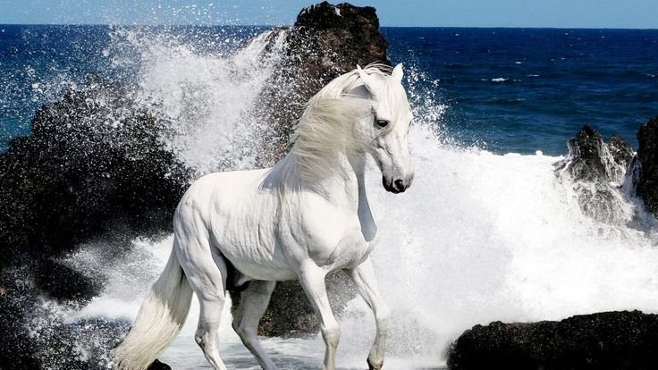 horse pictures in HD | White Horses HD Wallpapers Download Free Wallpapers in HD for your ...
