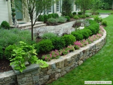 Boxwood shrubs stone wall gardening pinterest for Retaining wall plants landscaping
