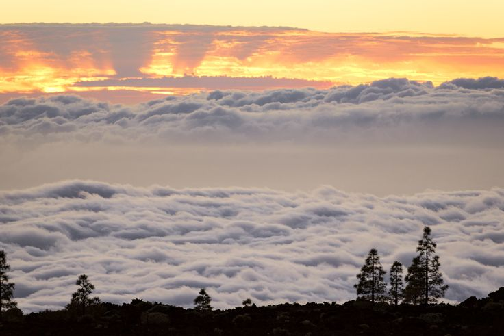Sunset trees grow on clouds by Federico Ciapi on 500px