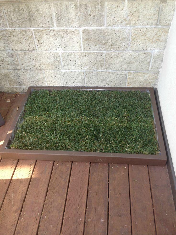 9 best dog grass pad images on pinterest dog potty pet pet and cubs. Black Bedroom Furniture Sets. Home Design Ideas
