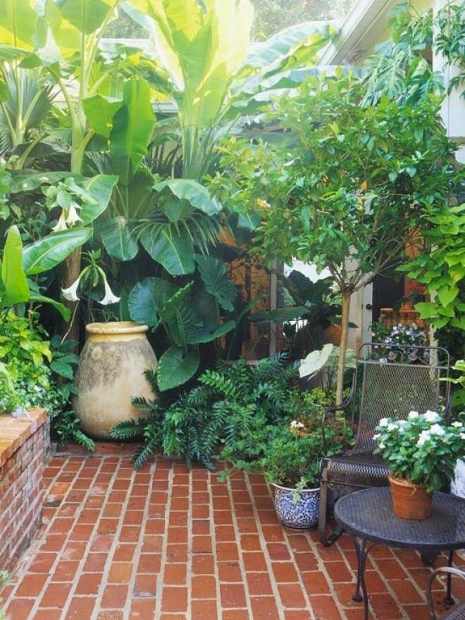 I love this lush, tropical look.  Sadly, not easy to get in my hot, dry area.