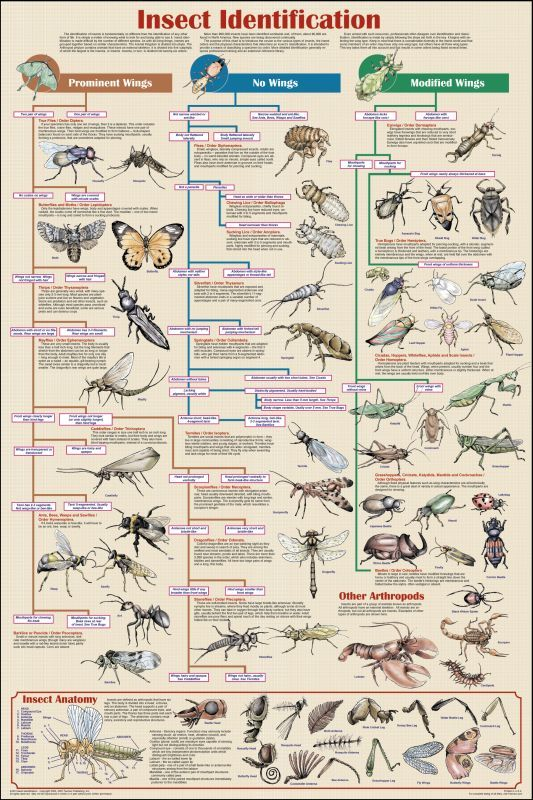 Insect Identification Chart non-laminated $5.95