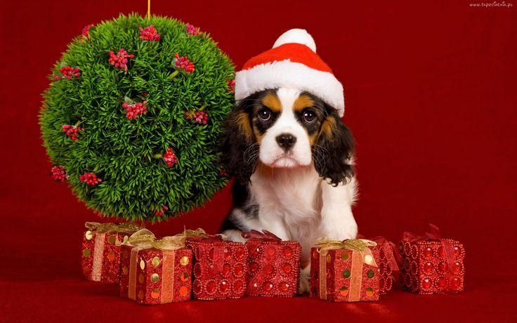 Pamiętajcie o świątecznym drobiazgu dla Waszych milusińskich! ;)