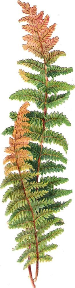 Oblaten Glanzbild scrap die cut chromo Farn fern 23,7 cm Wald Pflanze plant wood