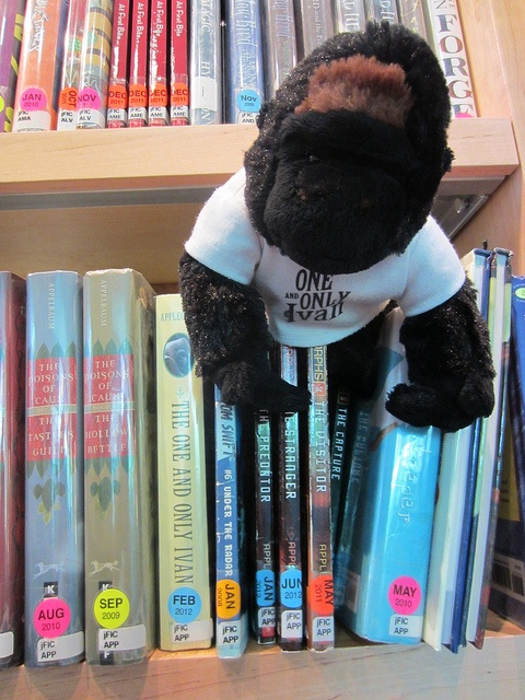 """Mr. Schu, the author of the fabulous children's literature blog """"Watch. Connect. Read."""" travels across the U.S. with a stuffed gorilla representing the book """"The One and Only Ivan"""". The journey will end with him seeing the real Ivan at Zoo Atlanta."""