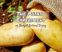 Budget Balcony Living: Budget Balcony Garden - Potato Experiment