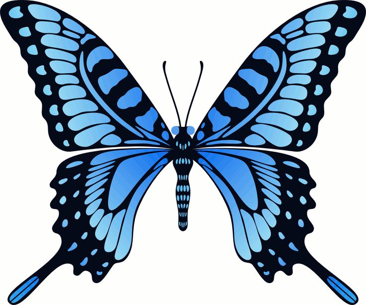 Butterfly Gif Image Art Collection at Best Animations