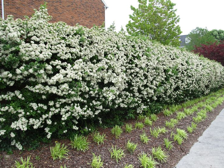 Find This Pin And More On Hedging Border Ideas