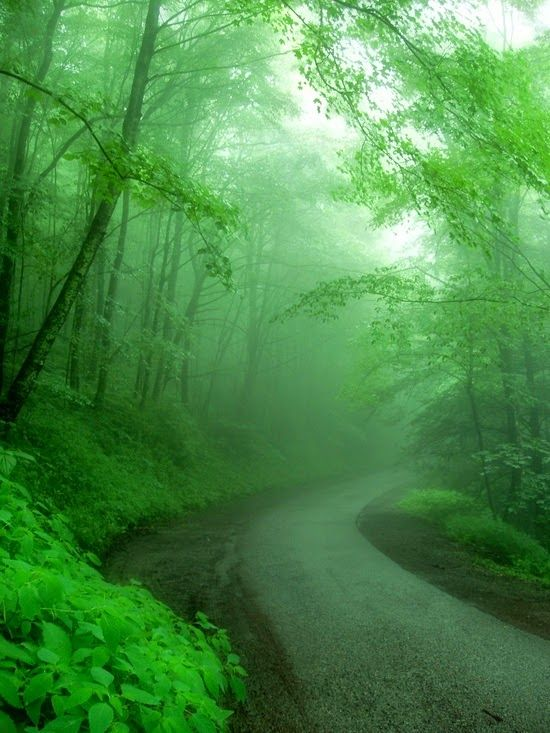 Incredible Pictures: Foggy Road, Gatlinburg, TN