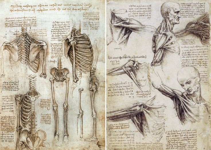 46 best ANATOMY AND PHYSIOLOGY images on Pinterest | Anatomy and ...
