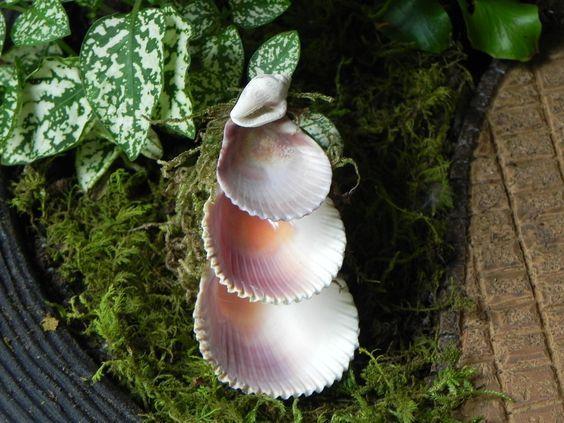 Miniature Fairy Garden Fountain 3 tier shells by TheLittleHedgerow - DIY Fairy Gardens