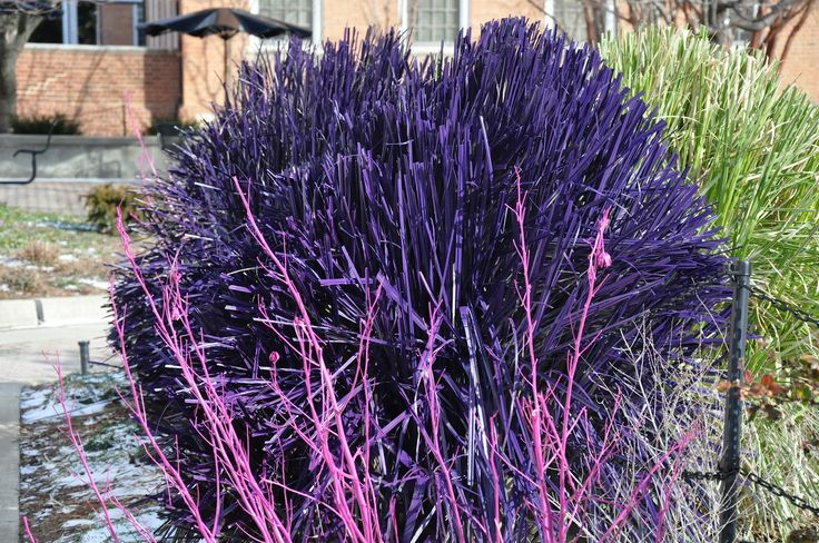 17 best images about god creates on pinterest for Hardy grasses for the garden