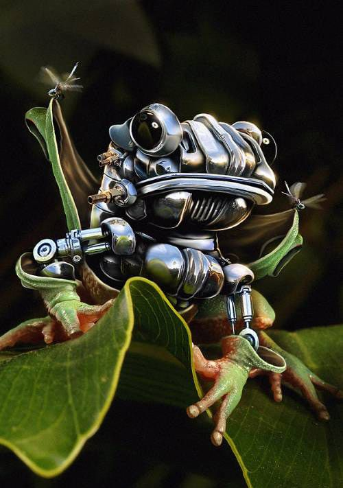 Great Photoshop work: Artsy Frogs, Awesome Photomanipul, Photoshop Photos, Photos Effects, Tutorials Photoshop, Robots Frogs, Frogs Photoshop, Photoshop Tutorials, Innovation Design