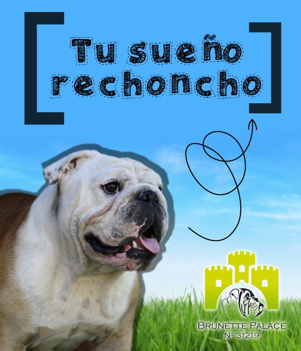 Diseño de logotipo para criadero de Bulldog Inglés: brunettepalace.com.ar