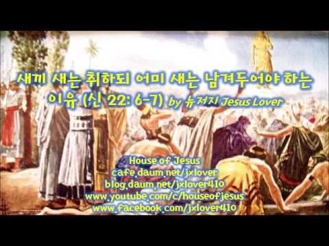 [신명기] 새끼 새는 취하되 어미 새는 남겨두어야 하는 이유 (신 22: 6-7) by 뉴저지 Jesus Lover