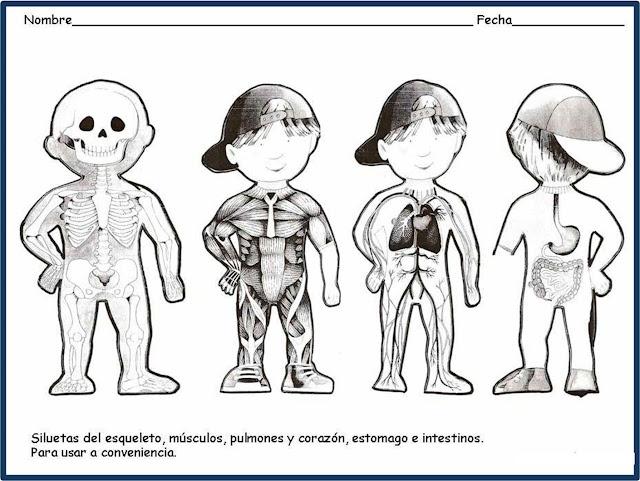 siluetas del cuerpo humano