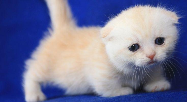 Obwohl die meisten Menschen, die Katzenliebhaber sind, sagen würden, dass alle Katzen süß und ad …   – Scotty