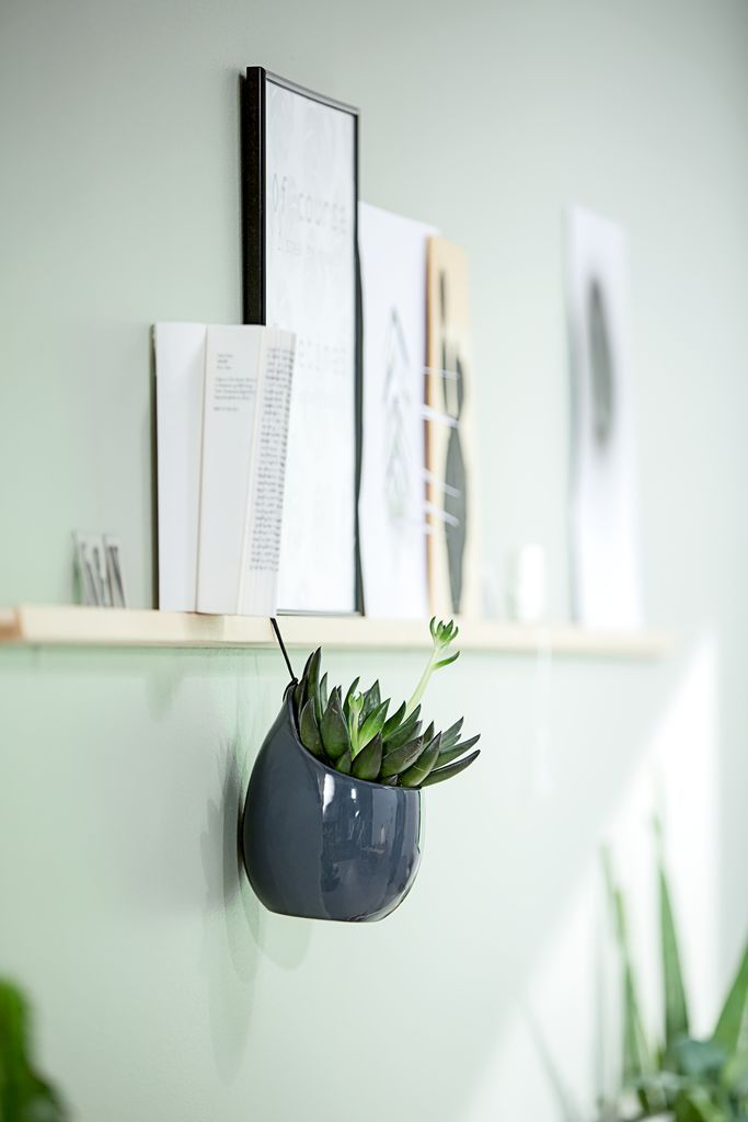 Indoor plants perfect for your home office. Add a few hanging or wall plants in order to bring nature indoors but not to clutter any desk space.