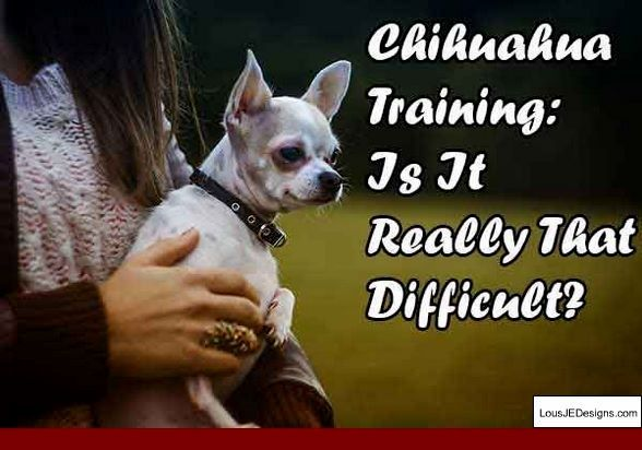 Tips For Training An Alpha Dog And Pics Of How To Train A Rescue