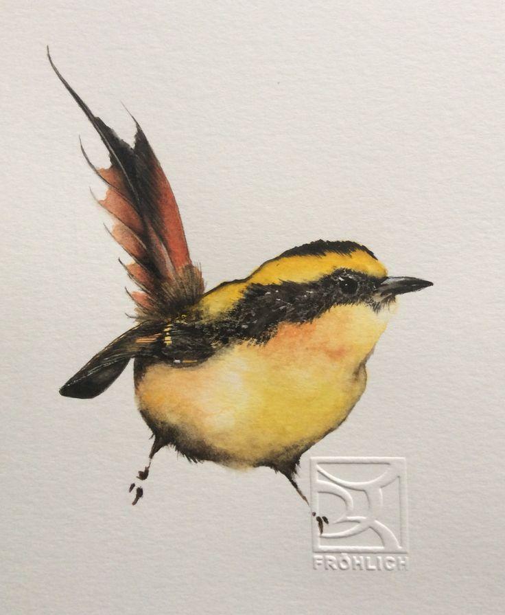RAYADITO Chilean bird in Watercolor